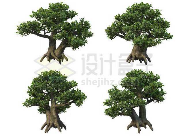 4棵榕树大型盆栽植物观赏植物6061570PSD免抠图片素材