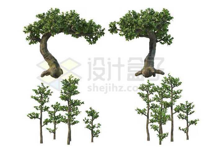 4棵榕树盆栽植物观赏植物造景8067795PSD免抠图片素材