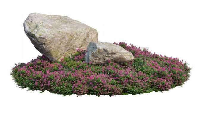 公园花圃里开着紫色花朵的千屈菜茂盛植被中间的两颗巨石1291314PSD免抠图片素材