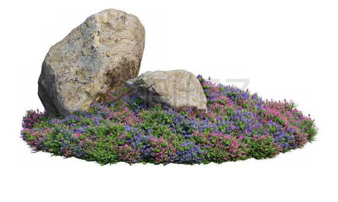 公园花圃里开着的药用牛舌草茂盛植被和中间的两块巨石1306291PSD免抠图片素材