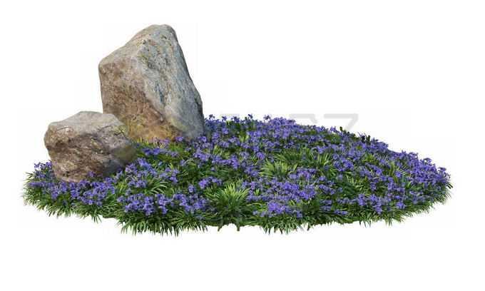 公园花圃里开着的薰衣草紫色花朵茂盛植被和中间的两块巨石8112718PSD免抠图片素材