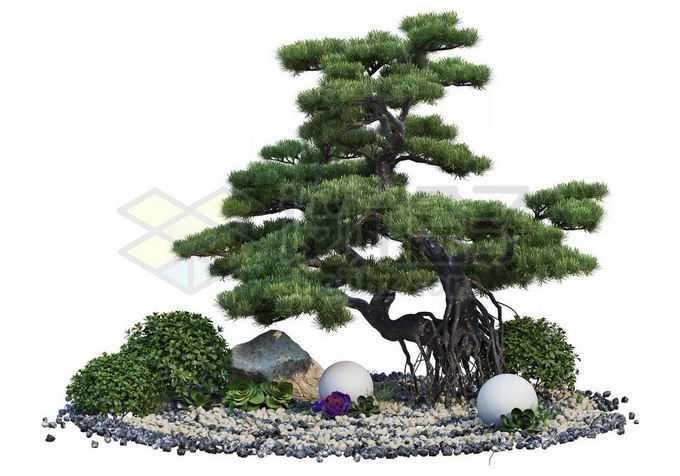 日本园林枯山水中的松树罗汉松盆景造型植物2678533PSD免抠图片素材