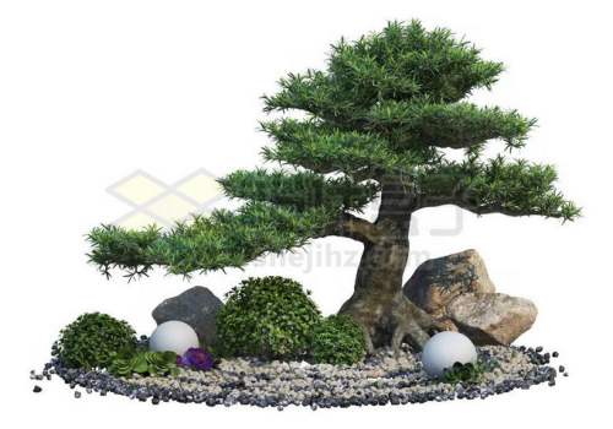 日本园林枯山水中的罗汉松盆景造型植物以及石块绿植装饰7412283PSD免抠图片素材