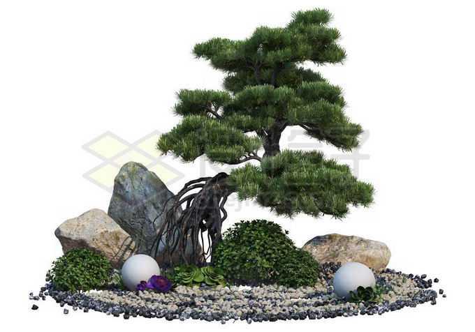 日本园林中生长在石头中的罗汉松盆景造型植物2495442PSD免抠图片素材