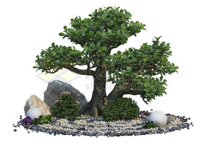 日本园林枯山水中的石头和罗汉松盆景造型植物1804551PSD免抠图片素材