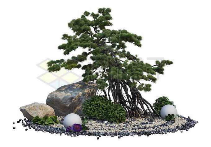日本园林枯山水中生长在石头中的榕树盆景造型植物8483458PSD免抠图片素材
