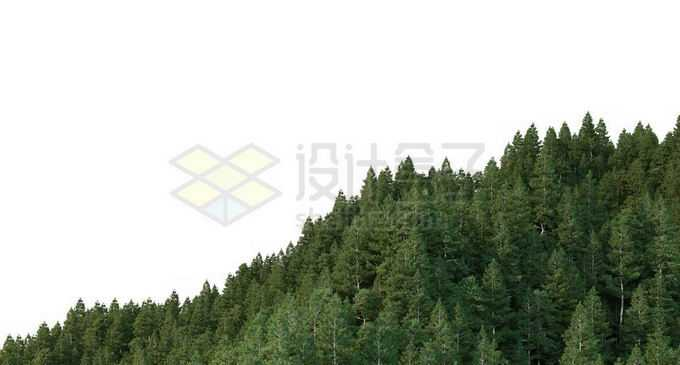 山坡上的茂密森林1399293PSD免抠图片素材