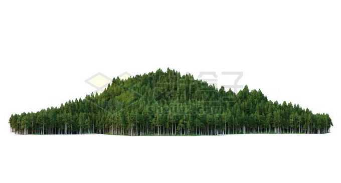 小山坡上茂密森林8463309PSD免抠图片素材