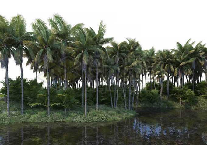 水边的椰子树林热带雨林风景9838868PSD免抠图片素材