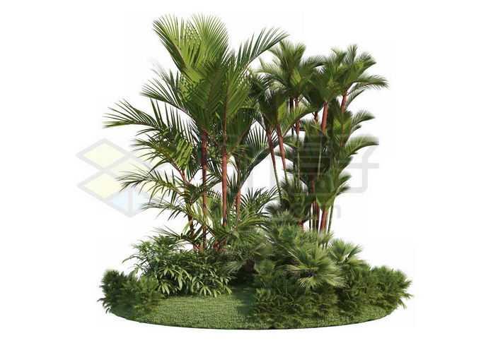 草地灌木丛上的红杆槟榔观赏植物7754034PSD免抠图片素材