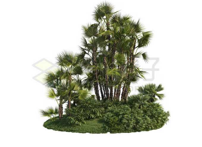 草地灌木丛上的蒲葵观赏植物8120209PSD免抠图片素材