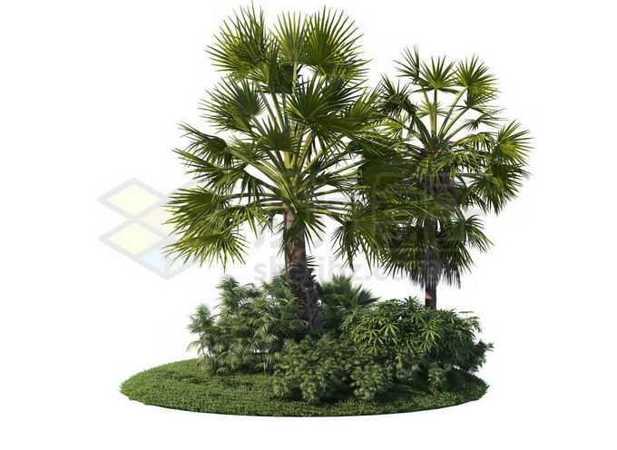 草地灌木丛上的棕榈树观赏植物6385111PSD免抠图片素材