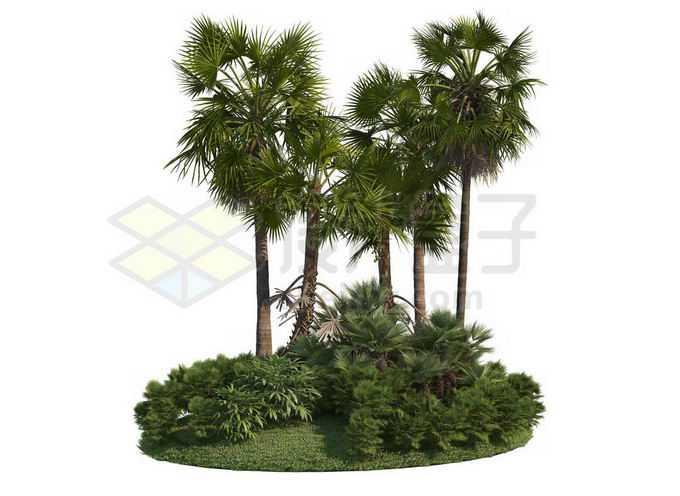 草地灌木丛上的棕榈树观赏植物园林景观3805228PSD免抠图片素材