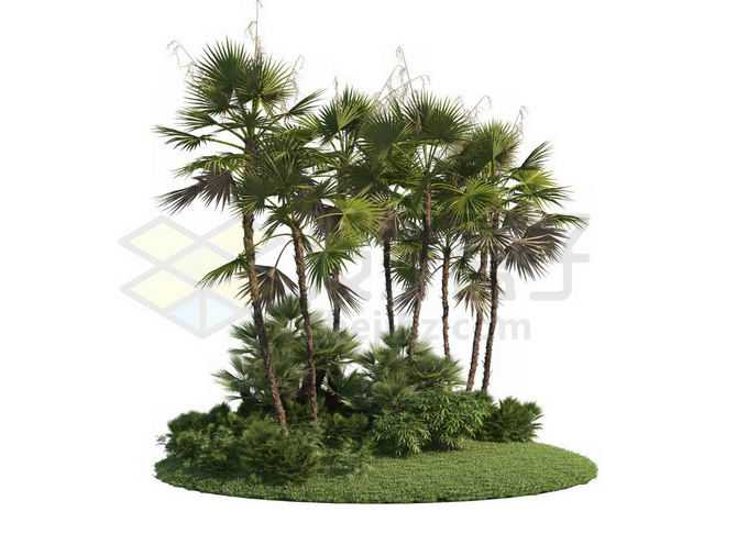 草地灌木丛上的棕榈树园林绿植观赏植物2350638PSD免抠图片素材