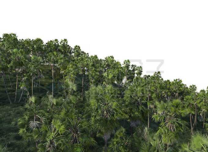 漫山遍野的大树热带雨林森林8328912PSD免抠图片素材