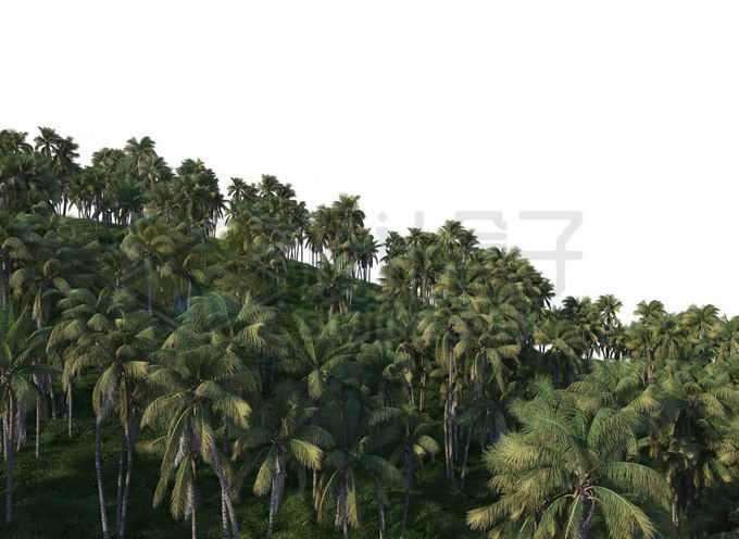 漫山遍野的椰子树大树热带雨林大森林1178874PSD免抠图片素材