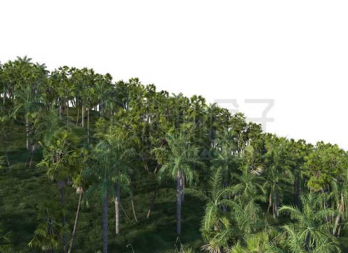 漫山遍野的椰子树热带雨林森林风光9729633PSD免抠图片素材