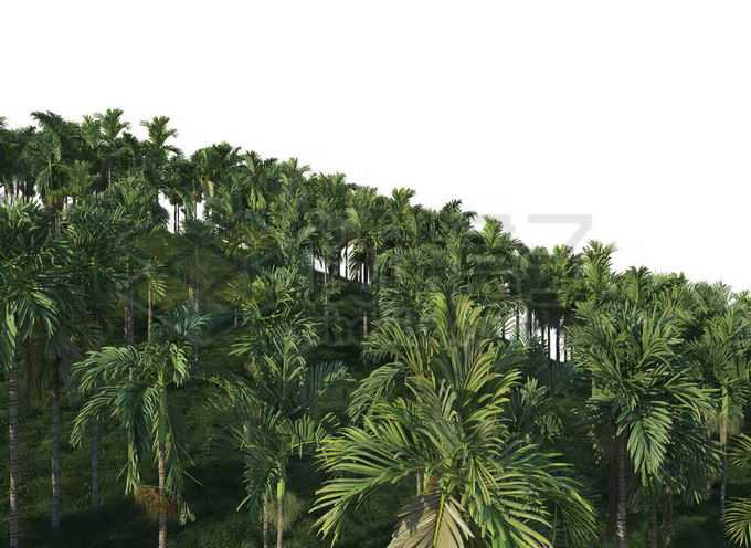 漫山遍野的椰子树热带雨林森林景观5515407PSD免抠图片素材