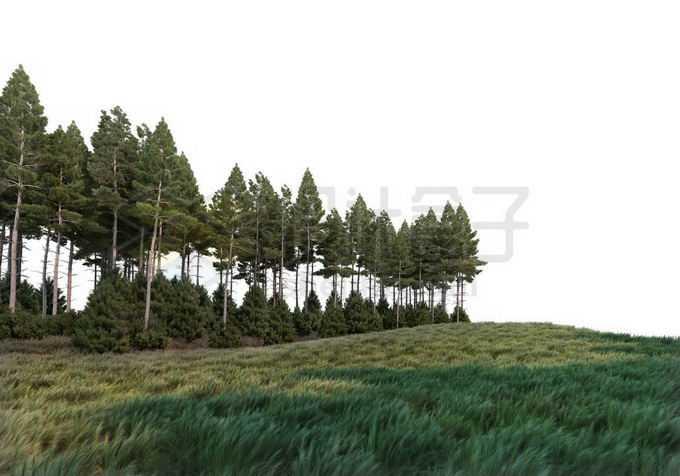 青青大草原草地旁边的树林中的大树自然景观4706600PSD免抠图片素材
