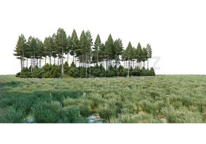大草原上的一片树林灌木丛自然景观3100019PSD免抠图片素材