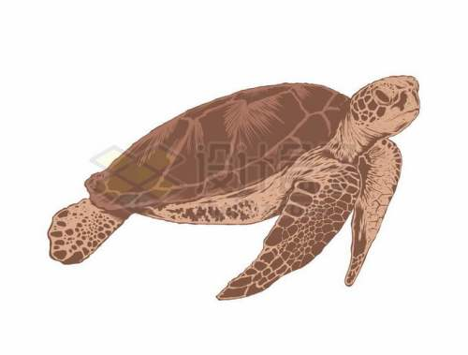 一只海龟手绘插画8438949矢量图片免抠素材免费下载