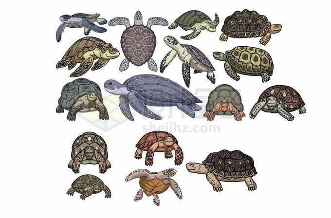 各种各样的海龟乌龟陆龟巨龟等龟科动物插画5844221矢量图片免抠素材免费下载