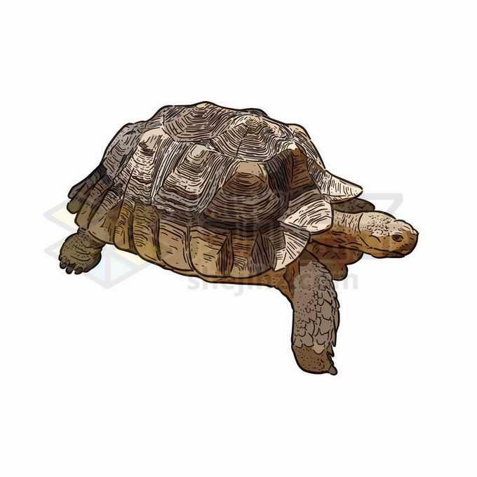 一只巨龟大乌龟陆龟手绘插画7278533矢量图片免抠素材免费下载