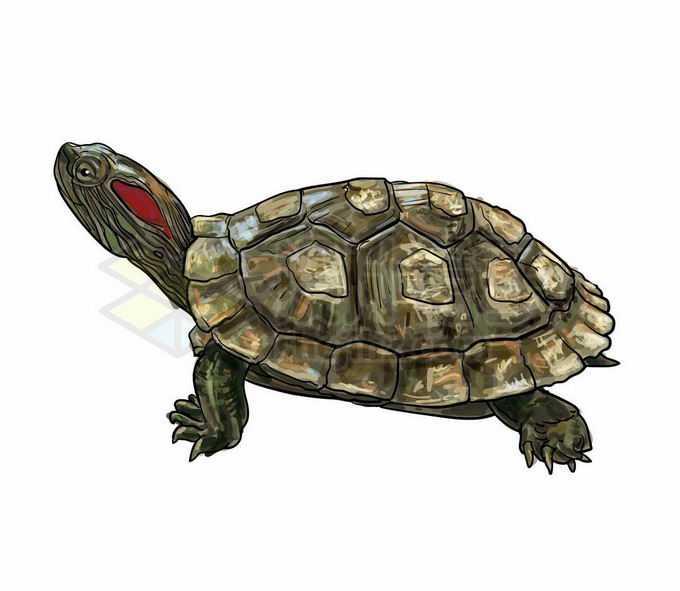 一只巴西红耳龟巴西龟乌龟爬行动物3281109矢量图片免抠素材免费下载