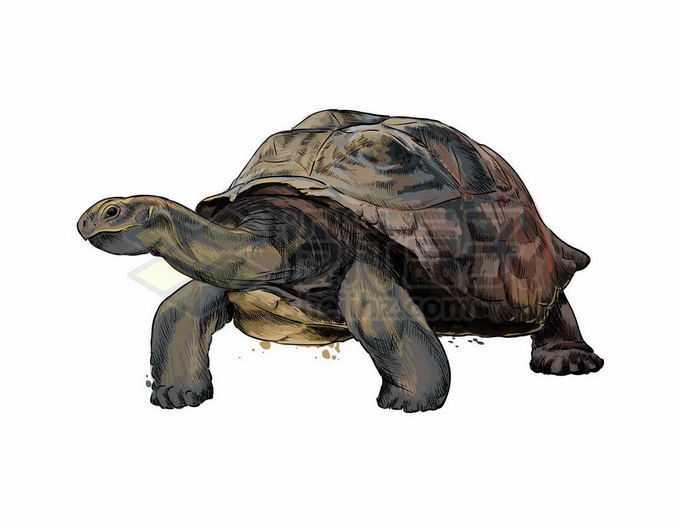 一只大乌龟陆龟加拉帕戈斯群岛象龟爬行动物9456588矢量图片免抠素材免费下载