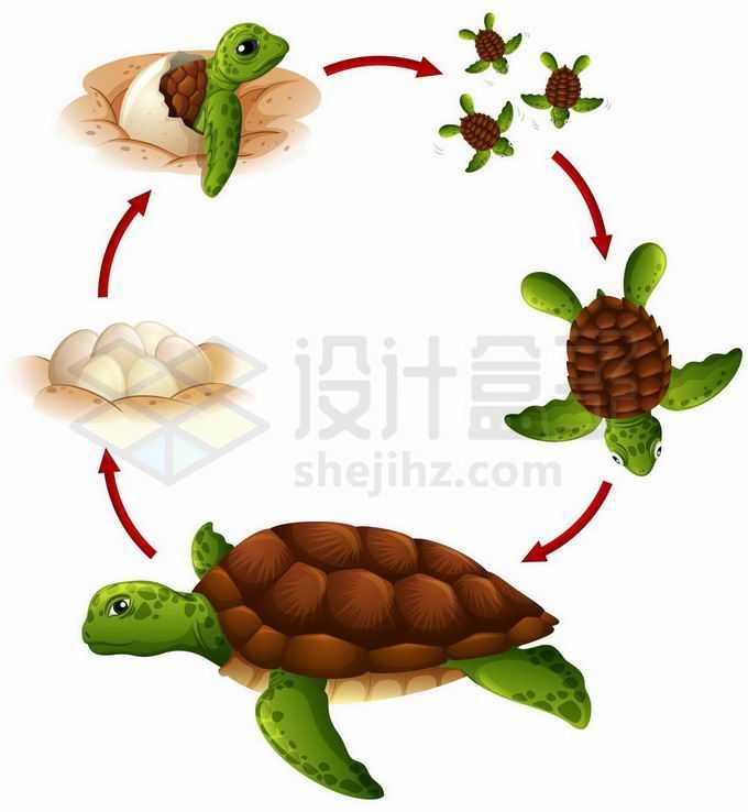 海龟的一生从出壳到变成海龟到产卵6842250矢量图片免抠素材免费下载