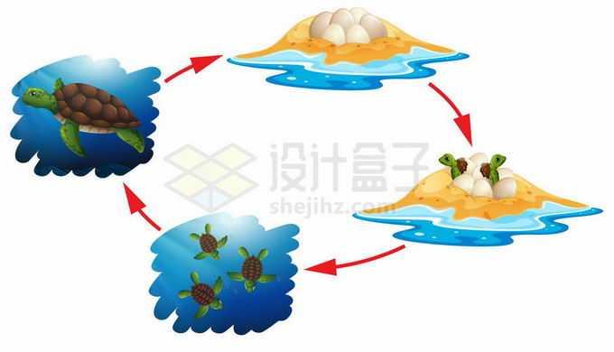 海龟的一生循环从出壳到变成海龟到产卵5891037矢量图片免抠素材免费下载