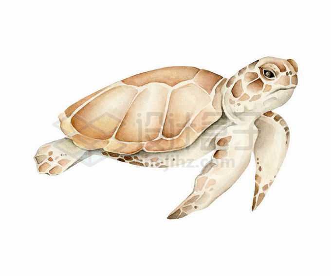 一只海龟水彩插画9184617矢量图片免抠素材免费下载