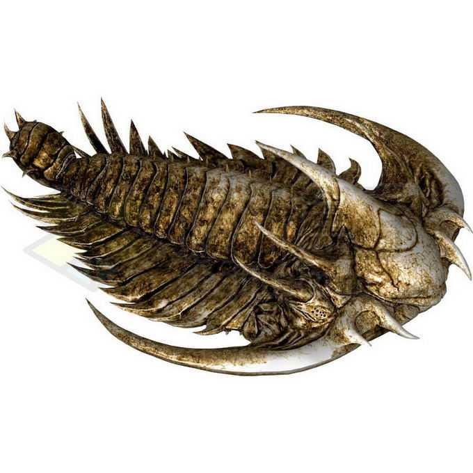 身上长着骨刺的三叶虫寒武纪远古生物8836787png免抠图片素材