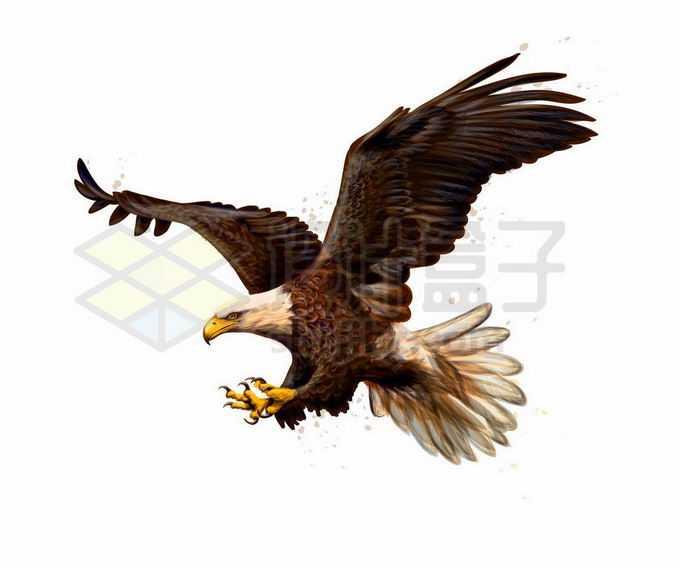 展翅雄鹰白头鹰猛禽插画8201111矢量图片免抠素材免费下载