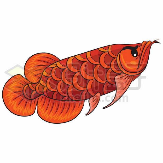 一条金红色的金龙鱼美丽硬仆骨舌鱼插画1065397矢量图片免抠素材免费下载
