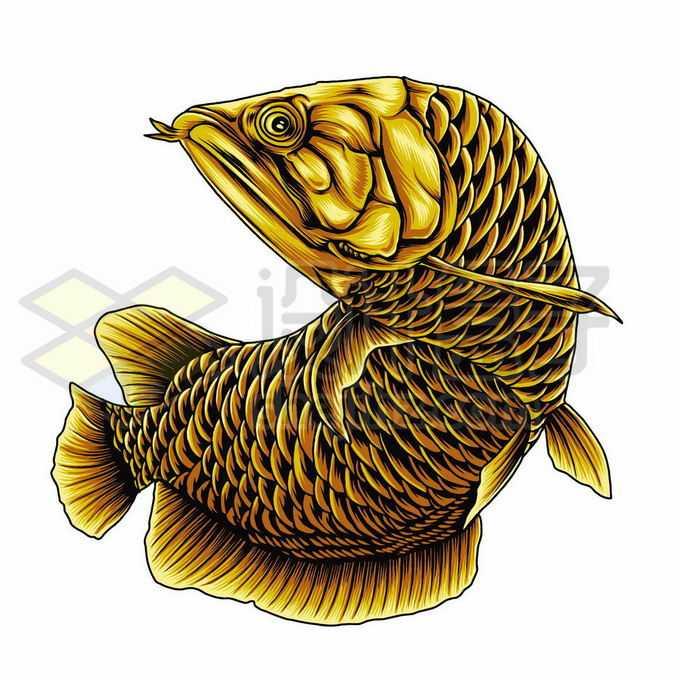 一条金黄色的金龙鱼美丽硬仆骨舌鱼插画6291112矢量图片免抠素材免费下载