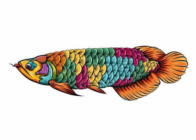 一条彩色的金龙鱼美丽硬仆骨舌鱼插画8975906矢量图片免抠素材免费下载