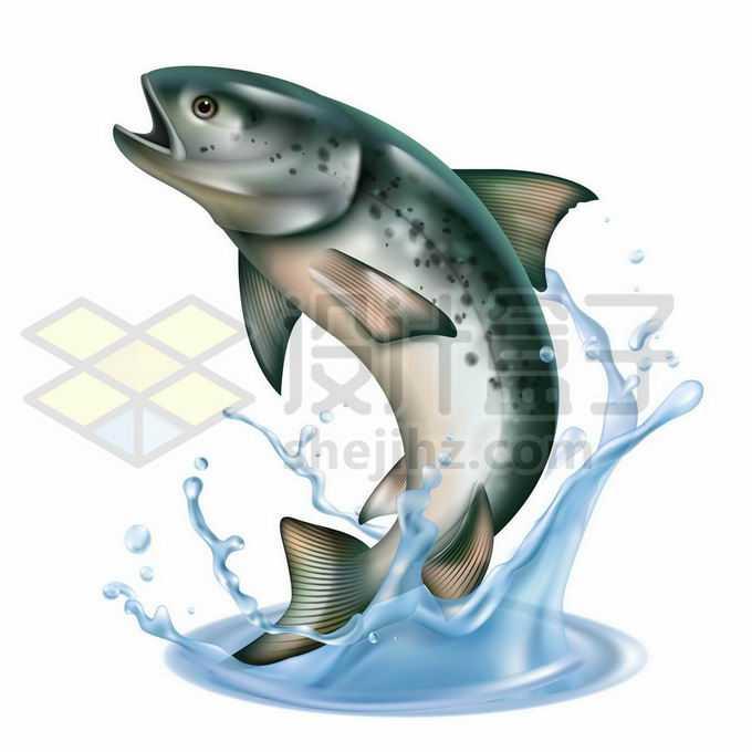 跳出水面的三文鱼大马哈鱼鲑鱼溅起水花4239438矢量图片免抠素材免费下载