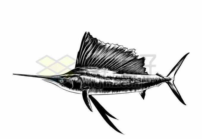 一条旗鱼海洋鱼类黑白色手绘插图6384971矢量图片免抠素材免费下载
