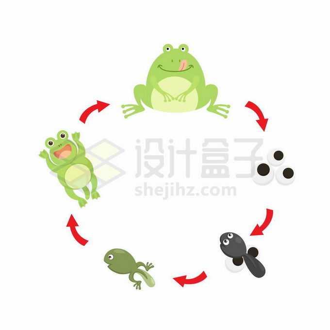 卡通青蛙的生命周期:从受精卵到小蝌蚪到青蛙生物课插画6650296矢量图片免抠素材免费下载