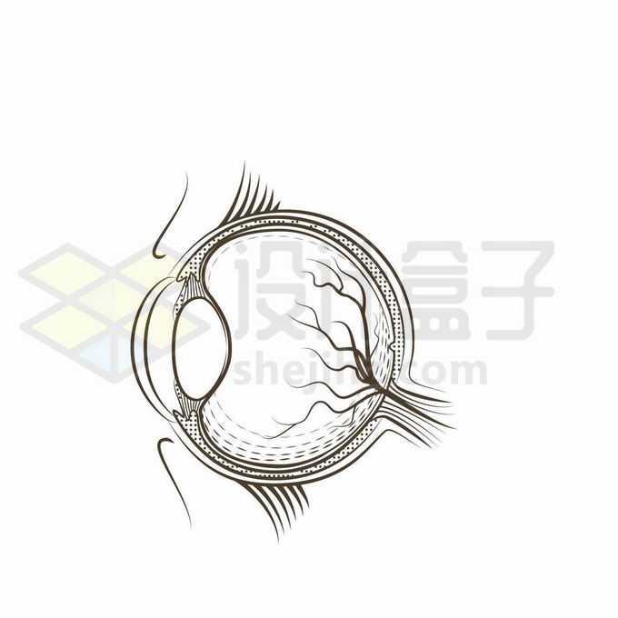 人体眼球的结构图素描插画6292768矢量图片免抠素材免费下载
