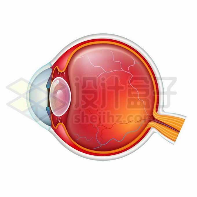 一款逼真的人体眼球结构图9402566矢量图片免抠素材免费下载