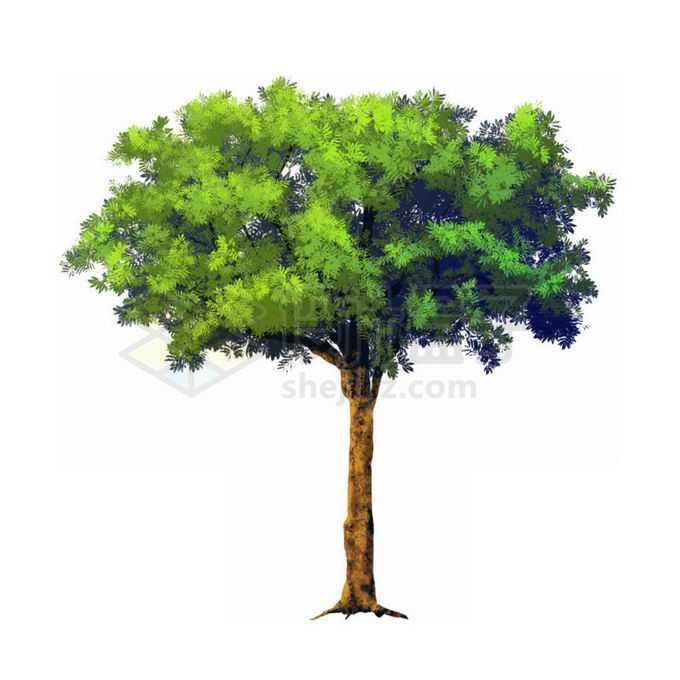 郁郁葱葱的大树绿树免抠图片素材