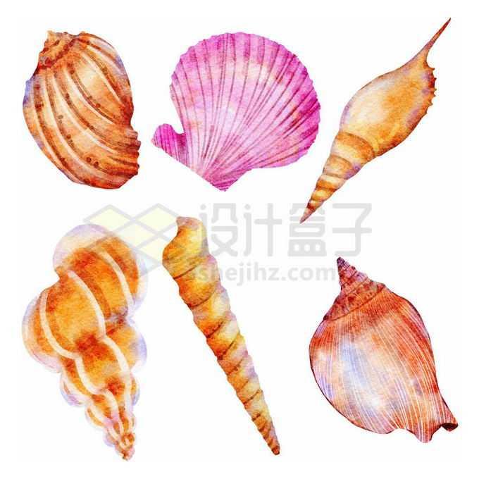 香螺扇贝海螺等贝壳水彩画免抠图片素材