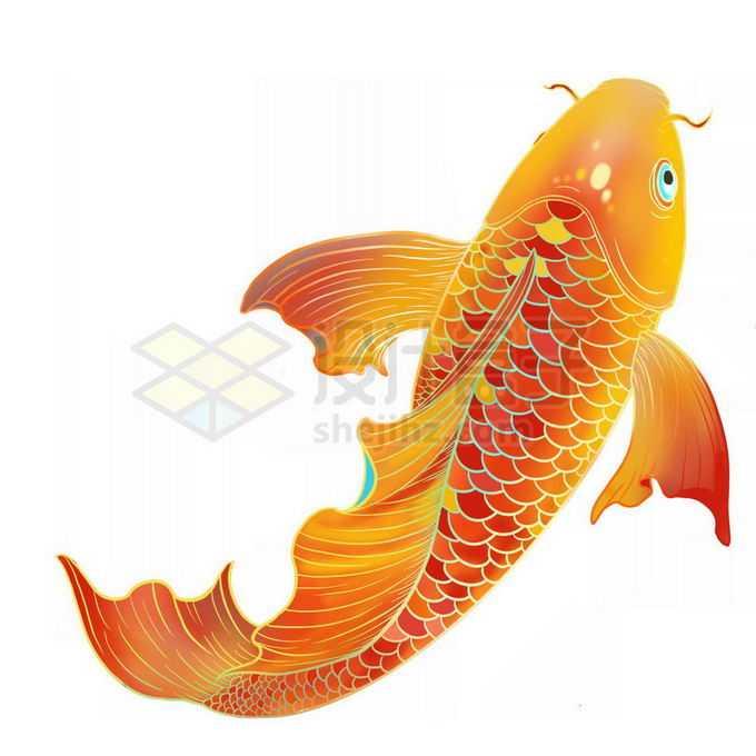 一条金红色的锦鲤免抠图片素材