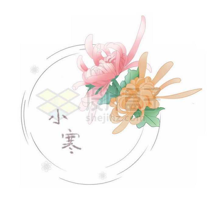 盛开的菊花小寒二十四节气免抠图片素材