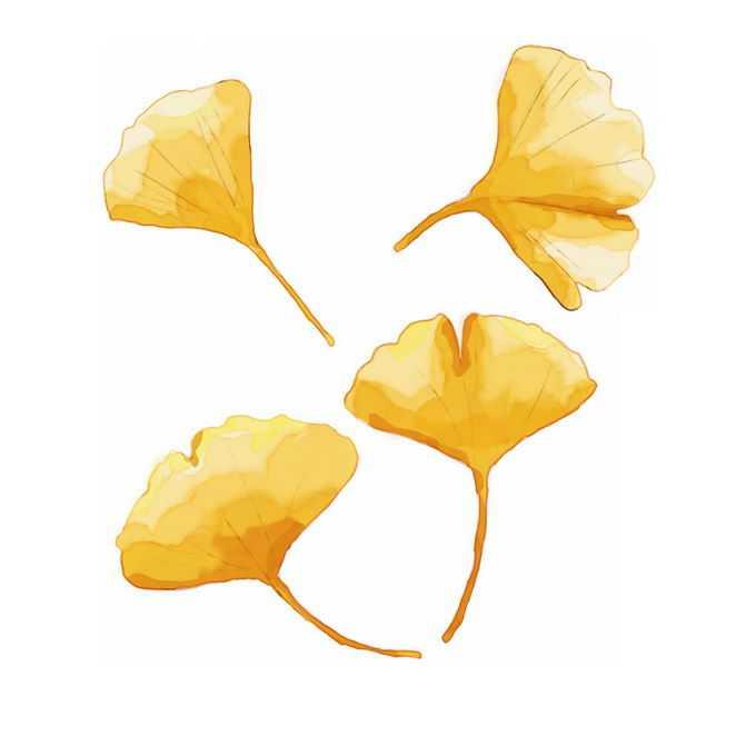 秋天金黄色的银杏叶水彩画2719703免抠图片素材