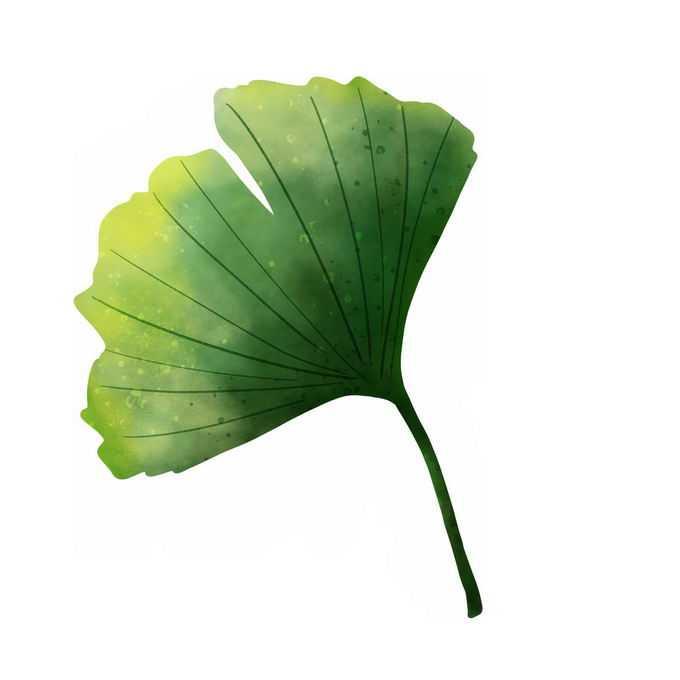 翠绿色的银杏叶树叶7444307免抠图片素材
