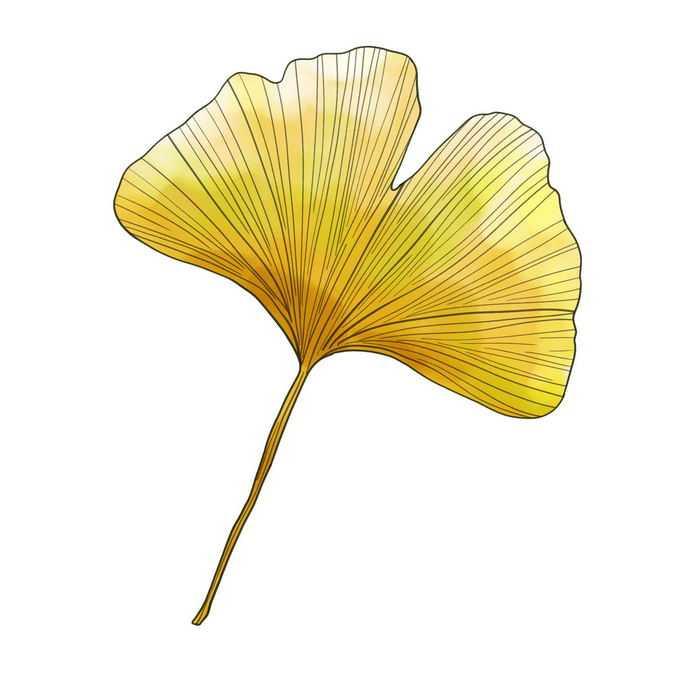 黄色的银杏叶秋天树叶插画9482020免抠图片素材