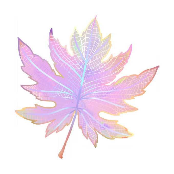 美丽的彩色枫叶树叶9232755免抠图片素材